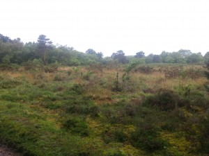 Holt Heath - Heathland